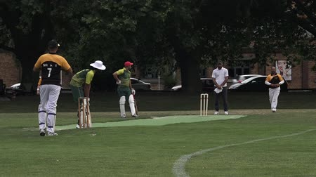 cricket pads : Men play Cricket in Victoria park Auckland, New Zealand.Cricket is played by 120 million players in many countries, making it the worlds 2nd most popular sport. Stock Footage