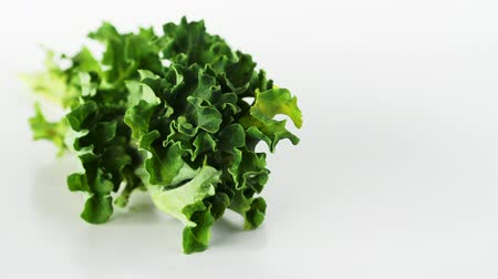 picked up : Kale Curly-leaf  vegetable studio closeup on a white background.Food texture and concept. Superfoods