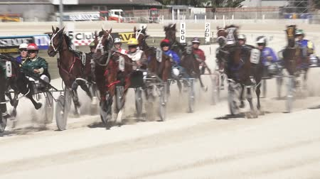 nzl : Harness racing in Alexandra Park Raceway in Auckland New Zealand.Chariot racing developed by the ancient Assyrian civilisation about  2000 BC