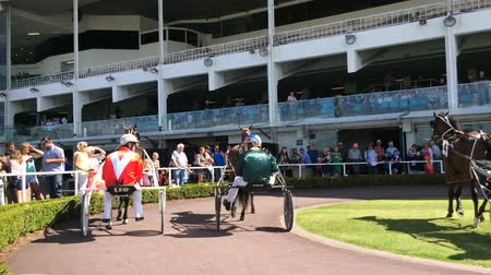 sulky : Harness racing in Alexandra Park Raceway in Auckland New Zealand.Chariot racing developed by the ancient Assyrian civilisation about  2000 BC