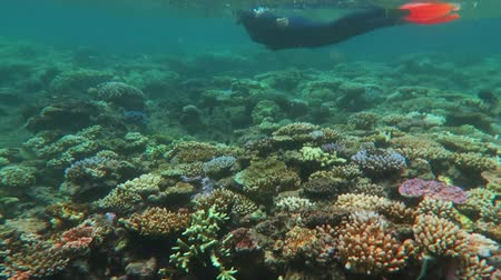 barriers : Snorkelling in a  coral reef marine life in the coral sea at the Great Barrier Reef in the tropical north of Queensland, Australia.