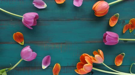 floral composition : Tulip flowers bouquet assorted in oval shape for your text. Women holiday concept. Flowers background with copy space.  4K