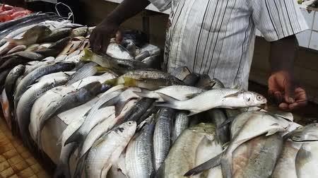 melanesia : Fresh fish for sale in Nadi fish market in Viti levu Island, Fiji. Fisheries are the third largest natural resource of Fiji Islands.