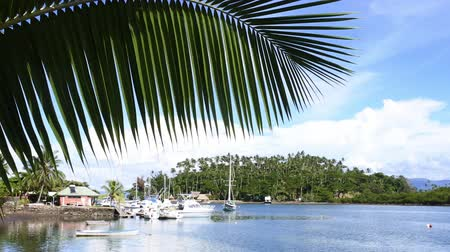 melanesia : Landscape of Nakama Creek in Savusavu in Vanua Levu Island, Fiji. Savusavu Nakama Creek is a popular Yachting base for cruising and a boat shelter during the cyclone season.