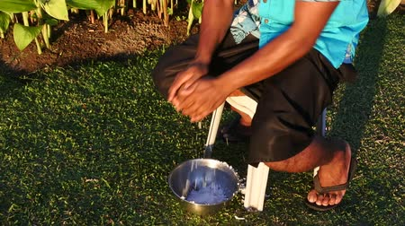 melanesia : Indigenous Fijian man husking a coconut fruit in Fiji Stock Footage