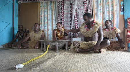 melanesia : Indigenous Fijians men participate in traditional Kava Ceremony in Fiji. The consumption of the drink is a form of welcome and figures in important socio-political events.