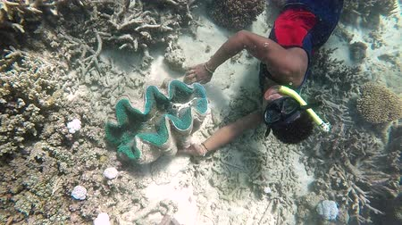 melanesia : Indigenous Fijian man during a dive trip to a Giant clams (Tridacna gigas) in a coral reef in The Yasawa Islands of Fiji.Tridacna gigas is one of the most endangered clam species. Stock Footage