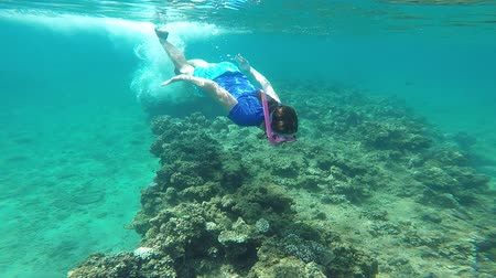 melanesia : Young woman snorkeling underwater over a coral reef in a tropical resort on Vanua Levu Island, Fiji. Real people copy space Stock Footage
