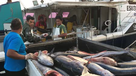 territorial : Cook Islanders fishermen unloading their catch in Ports of Avatiu. Cook Islands exclusive economic zone territorial waters stretches for nearly 2 million square km (772,395 sq)