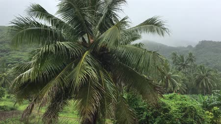 monção : Tropical rain storm during the wet rainy tropics monsoon season in Rarotonga, Cook Islands