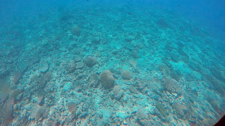 submarino : Underwater view coral reef Rarotonga Cook Islands