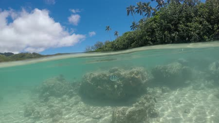 pacific islands : Tropical fish swim underwater Muri Lagoon in Rarotonga island, Cook Islands