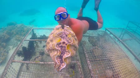 cook islanders : Giant clams farm in a lagoon in Rarotonga Cook Islands
