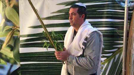 sukkah : Jewish man blessing on the four species (etrog,lulav ,hadass,aravah) in a sukkah or succah during the week-long Jewish festival of Sukkot. Stock Footage