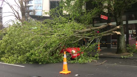 smashing : Tree crashed on a car in Queen Street due to a very high winds and bad weather in Auckland, New Zealand.
