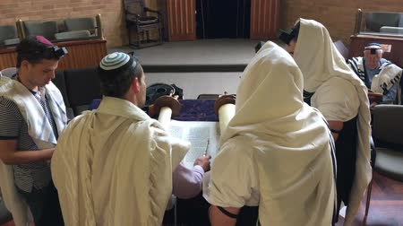 Jewish men reading and praying from a Torah scroll. Reading the Torah is one of the bases for Jewish life. Стоковые видеозаписи