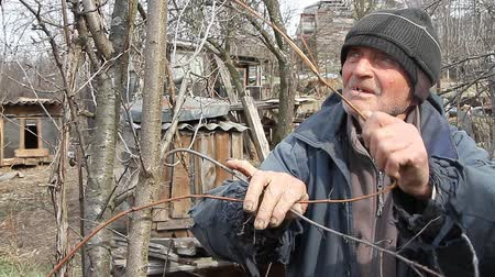 third world : A very old man inspects garden trees in the spring before flowering removes extra branches preparing for the new season. The concept of loneliness of old men in the village.