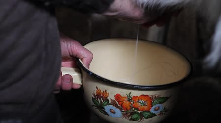 klatka : Closeup of old womans hands milking a goat healthy and natural diet in village
