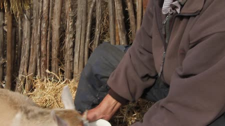 ümitsizlik : A very old sick man sits on a stool holding a goat in his hands, playing and feeding. Stok Video
