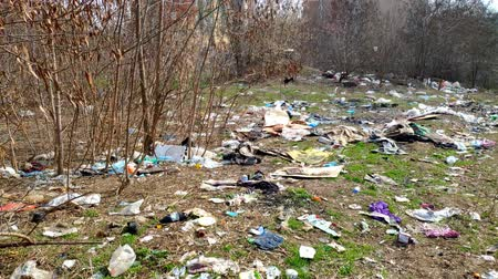 wysypisko śmieci : A lot of garbage falls on the ground in the forest. The problem of environmental pollution. The pollution of the environment by plastic and garbage.