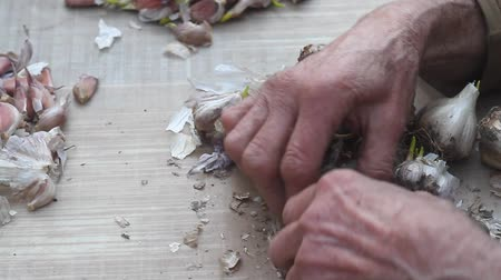 natural spicy : Close-up of old womans hands sifting and peeling garlic before cooking or planting in the ground outside, life on an old farm, own harvest, selective focus Stock Footage