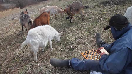 собственность : An old man in messy clothes sits on a hill playing checkers, grazing a flock of his own goats against the backdrop of a withered nature Стоковые видеозаписи