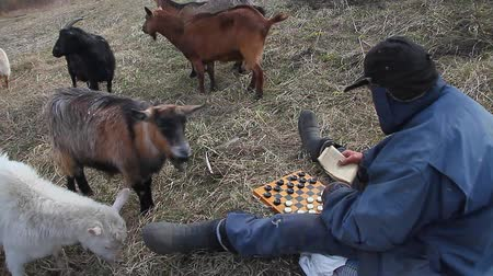 avlu : An old man in messy clothes sits on a hill playing checkers, grazing a flock of his own goats against the backdrop of a withered nature Stok Video