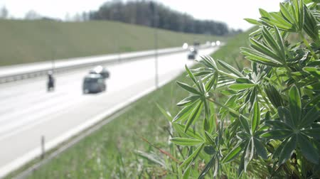 нечеткий : Highway. Green plants.