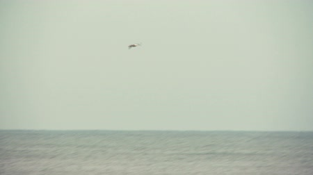 morze bałtyckie : Seagull flying over the Baltic sea.