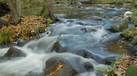 autumns : Autumns river flow, timelapse, beautiful scenery in the river. The colors and the leafs with the flow of the water.