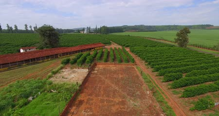 Chicken sheds and coffee plantation on a small property in a small Brazilian town Stok Video