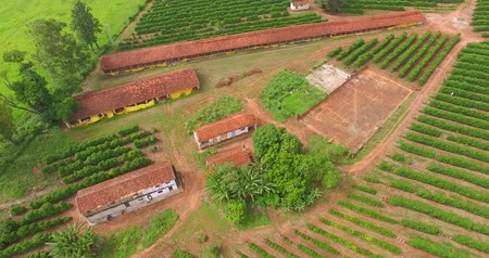 Chicken sheds and coffee plantation on a small property in a small Brazilian town Stock Footage