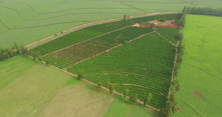 Coffee plantation farm in the interior of Brazil Stock Footage