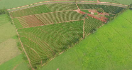 Coffee plantation farm in the interior of Brazil Stok Video