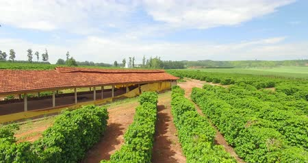 Very simple house and a coffee plantation in the interior of Brazil