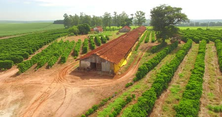Very simple house, coffee plantation and chicken coop on a farm in Brazil Stock Footage