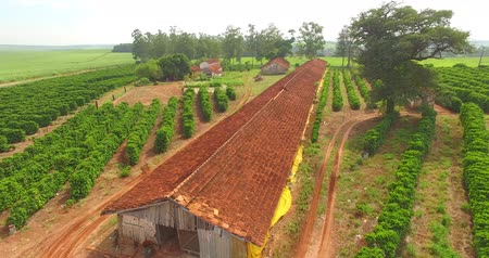 fiatal kis kakas : Very simple house, coffee plantation and chicken coop on a farm in Brazil Stock mozgókép