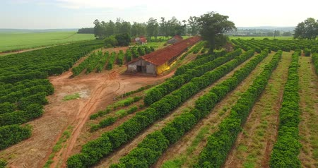 Very simple house, coffee plantation and chicken coop on a farm in Brazil Stok Video