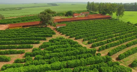 brezilya : Small coffee plantation farm in the city of Victorian, São Paulo Brazil
