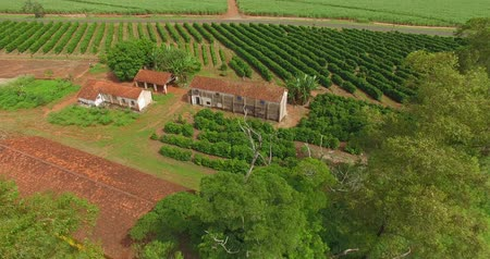 Small coffee plantation farm in the city of Victorian, São Paulo Brazil