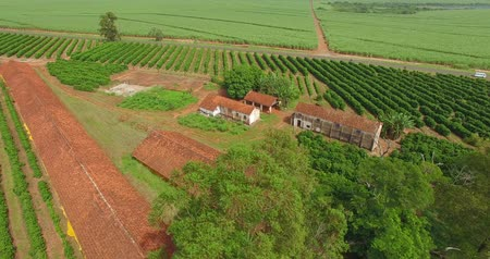 grãos de café : Small coffee plantation farm in the city of Victorian, São Paulo Brazil