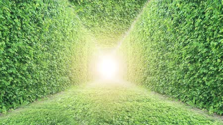 hera : Ivy Tunnel. Nature Green Grass Background.