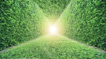 light rays : 4K Ivy Tunnel. Nature Green Grass Background.