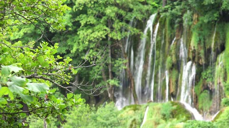plitvice : 4K Scenic Waterfalls Landscape at Plitvice Lakes National Park, Croatia.