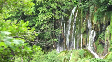 plitvice : 4K Scenic Waterfalls Landscape at Plitvice Lakes National Park, Croatia. (Focus on Branches)