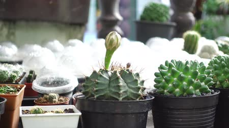 plantje : bloem cactus pot in de tuin Stockvideo