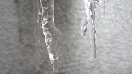 Dripping drops from melting icicles. HD video