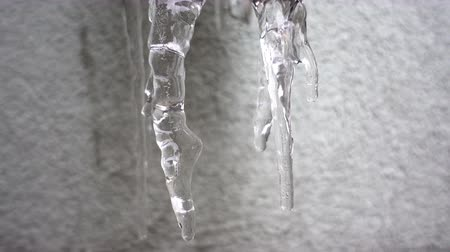 4K view drops dripping from melting icicles.