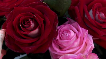 Beautiful bouquet of burgundy and pink roses as a background. HD video Stock Footage