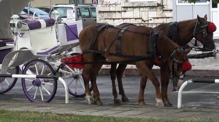 cavalo vapor : Horse-drawn carriage on the street. HD video